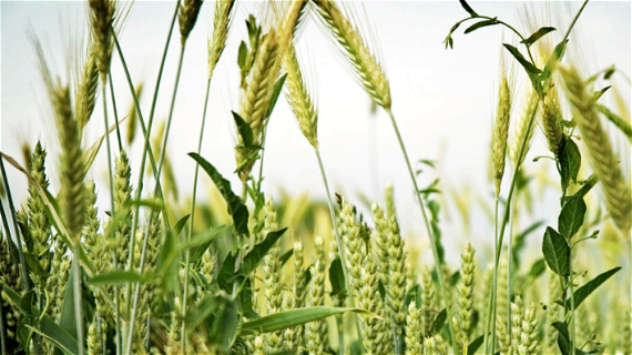 The Wheat and the Weeds: When and Whom?