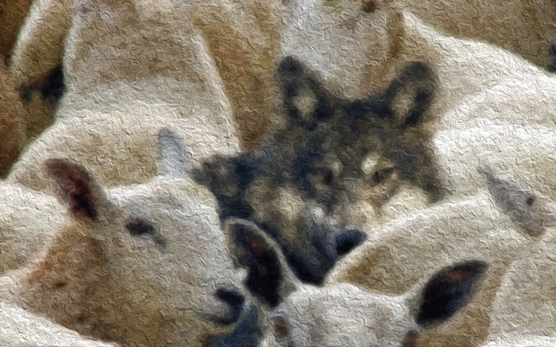 Exposing the Worldview Wolves